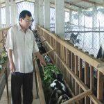 Mô hình sản xuất nông nghiệp hiệu quả ở Bến Tre - 23 10 2015 6h42 nuoi de 150x150