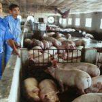 Thành công nhờ liên kết trong chăn nuôi - 26 150x150