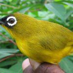 Một số bệnh thường gặp khi nuôi chim cảnh