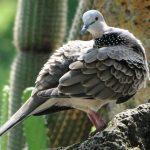 4 dấu hiệu nhận biết chim cảnh bị bệnh