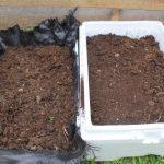 Cách làm đất trồng rau mầm trong thùng xốp đạt hiệu quả cao