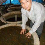 Công nghệ xử lý chất thải chăn nuôi bằng Giun đất