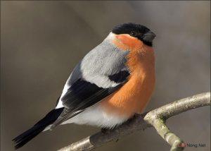 Tỷ lệ tạo chất khoáng trong thức ăn cho chim - Chim canh sai gon 300x214