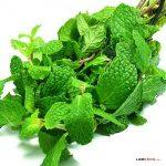 Các loại rau Húng phổ biến và công dụng của chúng - cac loai rau hung1 300x300 150x150