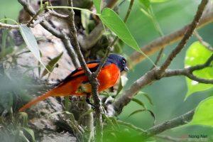 Cách chăm sóc chim Hồng Tước - cach cham soc chim hong tuoc1 300x200