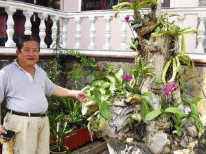 Chia sẻ cách trồng hoa Lan trên gốc cây - cach trong lan tren goc cay3 300x225