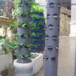 Tìm hiểu cách trồng rau sạch bằng ống nhựa