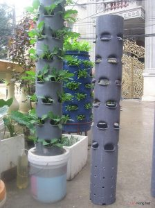 Tìm hiểu cách trồng rau sạch bằng ống nhựa - cach trong rau sach bang ong nhua1 224x300