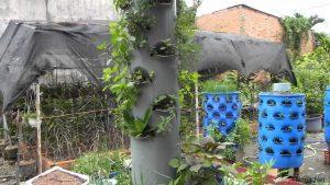 Tìm hiểu cách trồng rau sạch bằng ống nhựa - cach trong rau sach bang ong nhua4 300x169