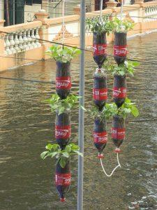 Cách trồng rau sạch bằng chai nhựa - cach trong rau sach1 225x300