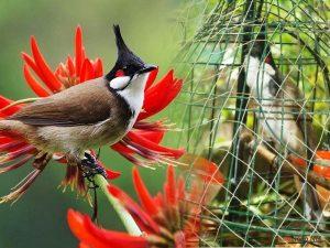 Làm thế nào để cắt tỉa cánh, mỏ và móng chân cho chim - cham soc chim canh 300x225