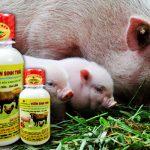 Ứng dụng chế phẩm Emina trong chăn nuôi - che pham sinh hoc vuon sinh thai cho heo lon 1401164047 150x150