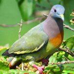 Thu nhập tiền tỷ nhờ nuôi chim cảnh