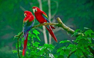 Những nguyên tắc vàng áp dụng để mua chim cảnh - chim canh de nuoi1 300x188 1