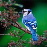 Cách nhận biết thức ăn cho chim quá nóng hoặc quá nhiều chất