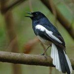 Cách phòng và chữa bệnh cho chim cảnh