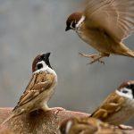 Một số phương pháp tập luyện cho chim cảnh hót