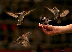 Bạn có biết loài chim học hót như thế nào? - chim se1 300x218