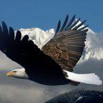 5 kỷ lục lạ của những loài chim có thể bạn chưa biết