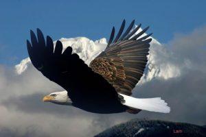 5 kỷ lục lạ của những loài chim có thể bạn chưa biết - chim ung 300x200
