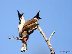 Những điều cần chú ý cho người mới nuôi chim cảnh - chu y khi nuoi chim canh hot 300x227