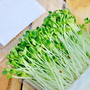 Tổng hợp các cách trồng rau mầm (Phần 1) - com bo 5 hop rau mam taro 9 300x300 2