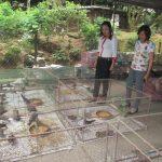 Thái Nguyên: Làm giàu từ nuôi chim Cu Gáy