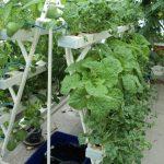 Thiết kế vườn rau trên sân thượng cơ bản