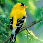 Những nguyên tắc vàng áp dụng để mua chim cảnh