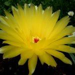 Cách chăm sóc Xương Rồng ra hoa đẹp
