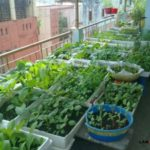 Hướng dẫn cách trồng rau sạch tại nhà đơn giản