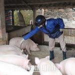 Nam Định: Đảm bảo an toàn dịch bệnh để phát triển chăn nuôi bền vững