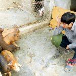 Phát triển đàn Lợn rừng ở Nghi Lộc (Nghệ An) - images1512360 16 150x150