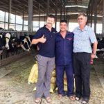 Phát triển trang trại Bò sữa từ cây rau