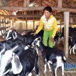 Phát triển mô hình nuôi dê ở Bình Trị (Quảng Ngãi)