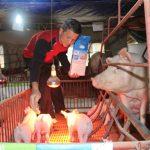 Hiệu quả từ chăn nuôi Lợn theo tiêu chuẩn VietGAP - img7848 150x150