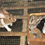 Kĩ thuật chọn giống và quản lí giống Thỏ - img 5803 jpg 150x150