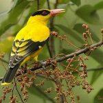 Chia sẻ kinh nghiệm thuần hóa chim rừng (Phần 2)