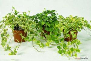 Nên trồng hoa gì trên sân thượng? (Phần 1) - nen trong hoa gi tren san thuong phan 1 2