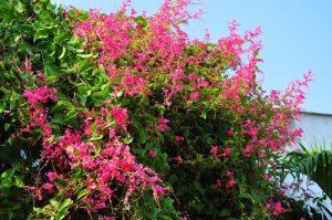 Nên trồng hoa gì trên sân thượng? (Phần 1) - nen trong hoa gi tren san thuong phan 1
