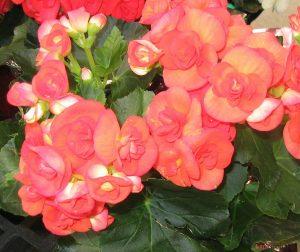 Nên trồng hoa gì trên sân thượng? (Phần 2) - nen trong hoa gi tren san thuong phan 2