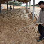 Quy trình làm đệm lót nền chuồng cho Gà - nguoidanchuanbi gathailan 150x150