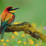 Những điều cần chú ý cho người mới nuôi chim cảnh - nhung dieu can chu y cho nguoi moi nuoi chim canh 150x150