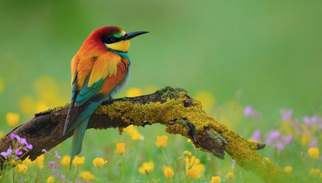 Những điều cần chú ý cho người mới nuôi chim cảnh - nhung dieu can chu y cho nguoi moi nuoi chim canh 640x365