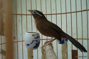 4 dấu hiệu nhận biết chim cảnh bị bệnh - nuoi chim canh lam giau 300x199