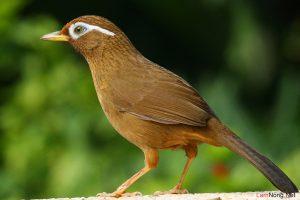 4 dấu hiệu nhận biết chim cảnh bị bệnh - nuoi chim canh lam giau2 300x200