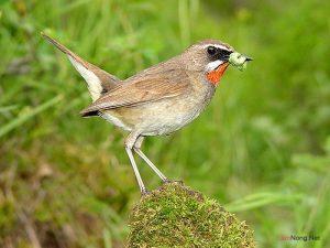 Chế độ dinh dưỡng khi nuôi chim cảnh sinh sản - nuoi chim canh sinh san1 300x225