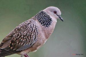 Chế độ dinh dưỡng khi nuôi chim cảnh sinh sản - nuoi chim canh sinh san2 300x200