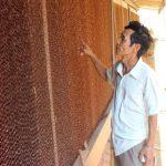 Mô hình nuôi Heo bằng hệ thống chuồng lạnh - nuoi heo bang chuong lanh 150x150