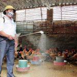 Cách vệ sinh chuồng trại chăn nuôi Gà - quy trinh ve sinh chuong trai nuoi ga2 150x150